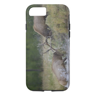 Elk Bulls fighting, Yellowstone NP, Wyoming iPhone 8/7 Case