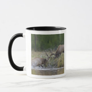 Elk Bulls fighting, Yellowstone NP, Wyoming Mug