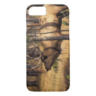 elk, Cervus elaphus, bull bugles in a burnt out iPhone 8/7 Case