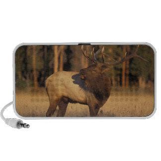 elk, Cervus elaphus, bull calling in iPod Speaker