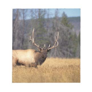 elk, Cervus elaphus, bull in a field in Notepad