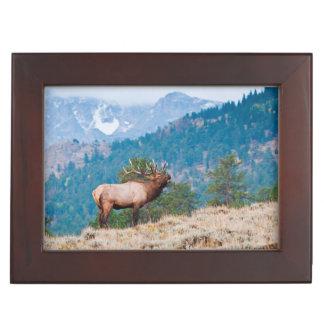 Elk (Cervus Elephus) Bull Bugling Keepsake Box