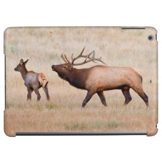 Elk (Cervus Elephus) Bull Herding Harem 2