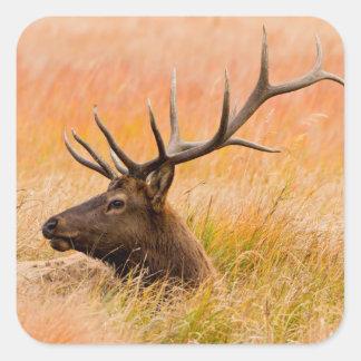 Elk (Cervus Elephus) Resting In Meadow Grass Square Sticker