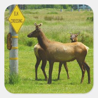 Elk Crossing California Wildlife Square Sticker