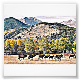 Elk Fest Photo Art