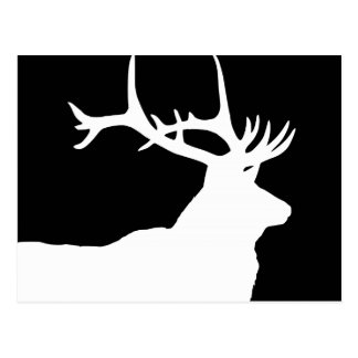 Elk Head Postcard