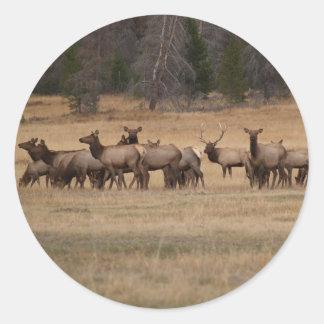 Elk Herd  Round Sticker