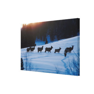 Elk herd walking through field gallery wrapped canvas