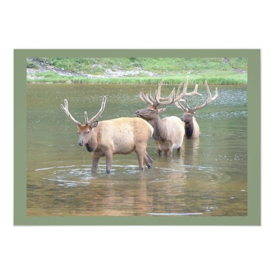 Elk Hunting Cards for Get Well, Hunter Birthday