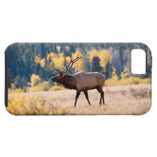 Elk in Rocky Mountain National Park, Colorado iPhone 5 Case