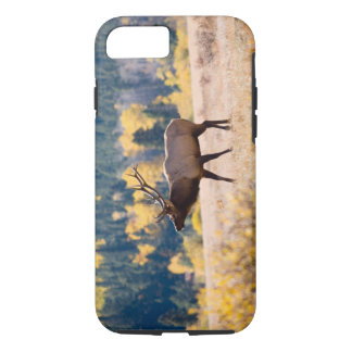 Elk in Rocky Mountain National Park, Colorado iPhone 8/7 Case