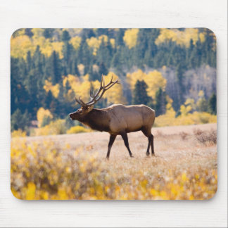 Elk in Rocky Mountain National Park, Colorado Mouse Mat