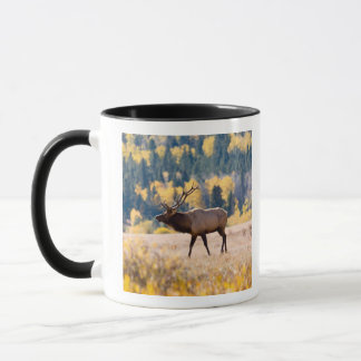 Elk in Rocky Mountain National Park, Colorado Mug