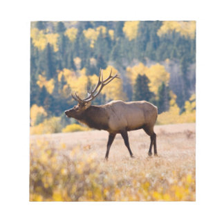 Elk in Rocky Mountain National Park, Colorado Notepads