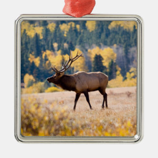 Elk in Rocky Mountain National Park, Colorado Silver-Colored Square Decoration
