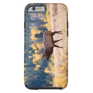 Elk in Rocky Mountain National Park, Colorado Tough iPhone 6 Case