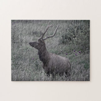Elk in Rocky Mountain National Park Puzzle