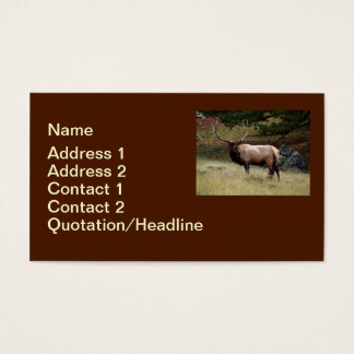 Elk in the Wild Business Card