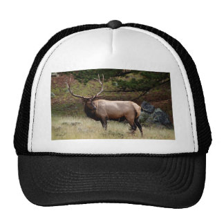 Elk in the Wild Mesh Hat