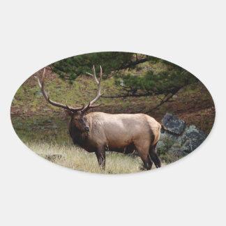 Elk in the Wild Oval Sticker