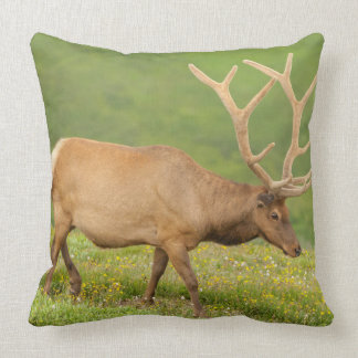 Elk in velvet walking, Colorado Cushion