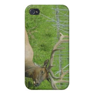 Elk Iphone case iPhone 4/4S Case