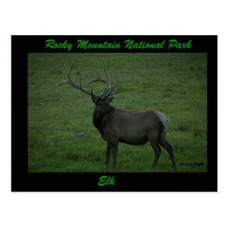 Elk, Milner Pass Postcard