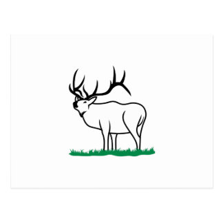 Elk Outline Postcard