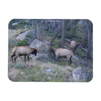 Elk photo magnet