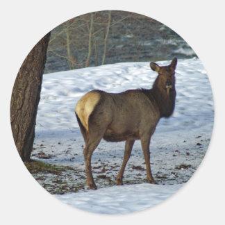 Elk Round Sticker