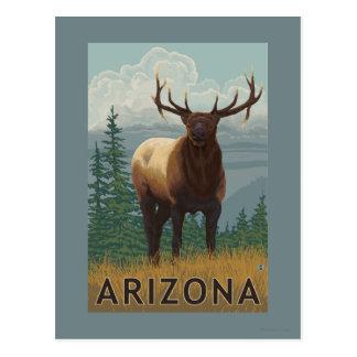 Elk SceneArizona Postcard