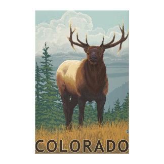 Elk SceneColorado Stretched Canvas Prints
