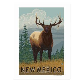 Elk SceneNew Mexico Postcard