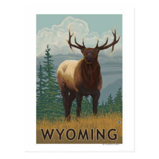 Elk SceneWyoming Postcard