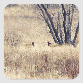 Elk Square Sticker
