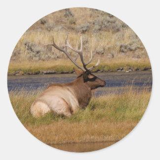 Elk Round Stickers