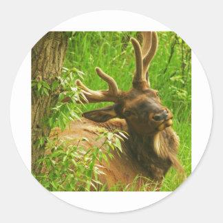Elk summer round sticker