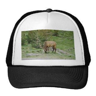 Elk With Velvet Antlers Trucker Hat