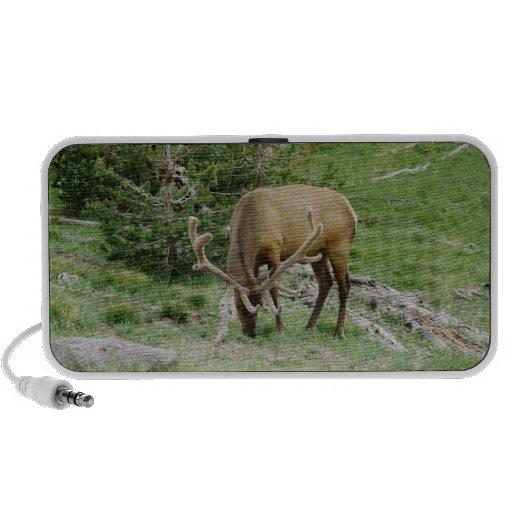 Elk With Velvet Antlers Portable Speakers