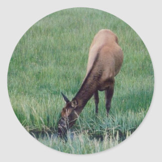 Elk- Yellowstone Round Sticker