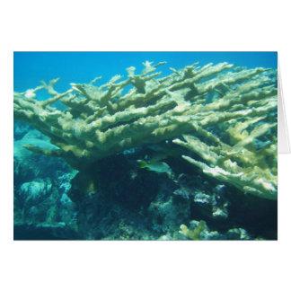Elkhorn Coral Bahamas Greeting Card