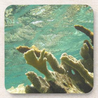 Elkhorn coral in Florida Keys Drink Coasters
