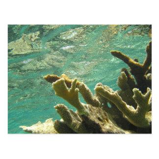 Elkhorn coral in Florida Keys Postcard