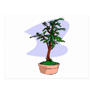 Elm Like Bonsai Tree Pink Pot Postcard