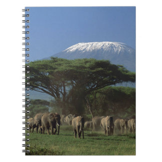 Elphants of Mt.Kilimanjaro Notebooks
