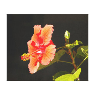 Embossed Hibiscus, Brenda's Flower Canvas Print