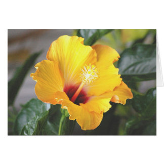 Embossed Yellow Hibiscus, Mellow Card