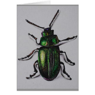 Emerald Beetle Products Card