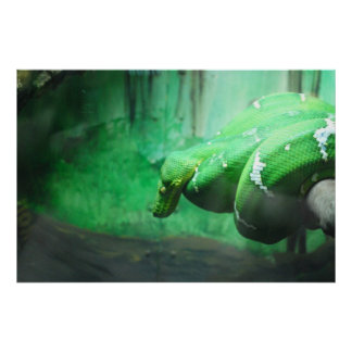 Emerald Boa Poster